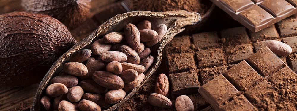 cocoa bean and dark chocolate