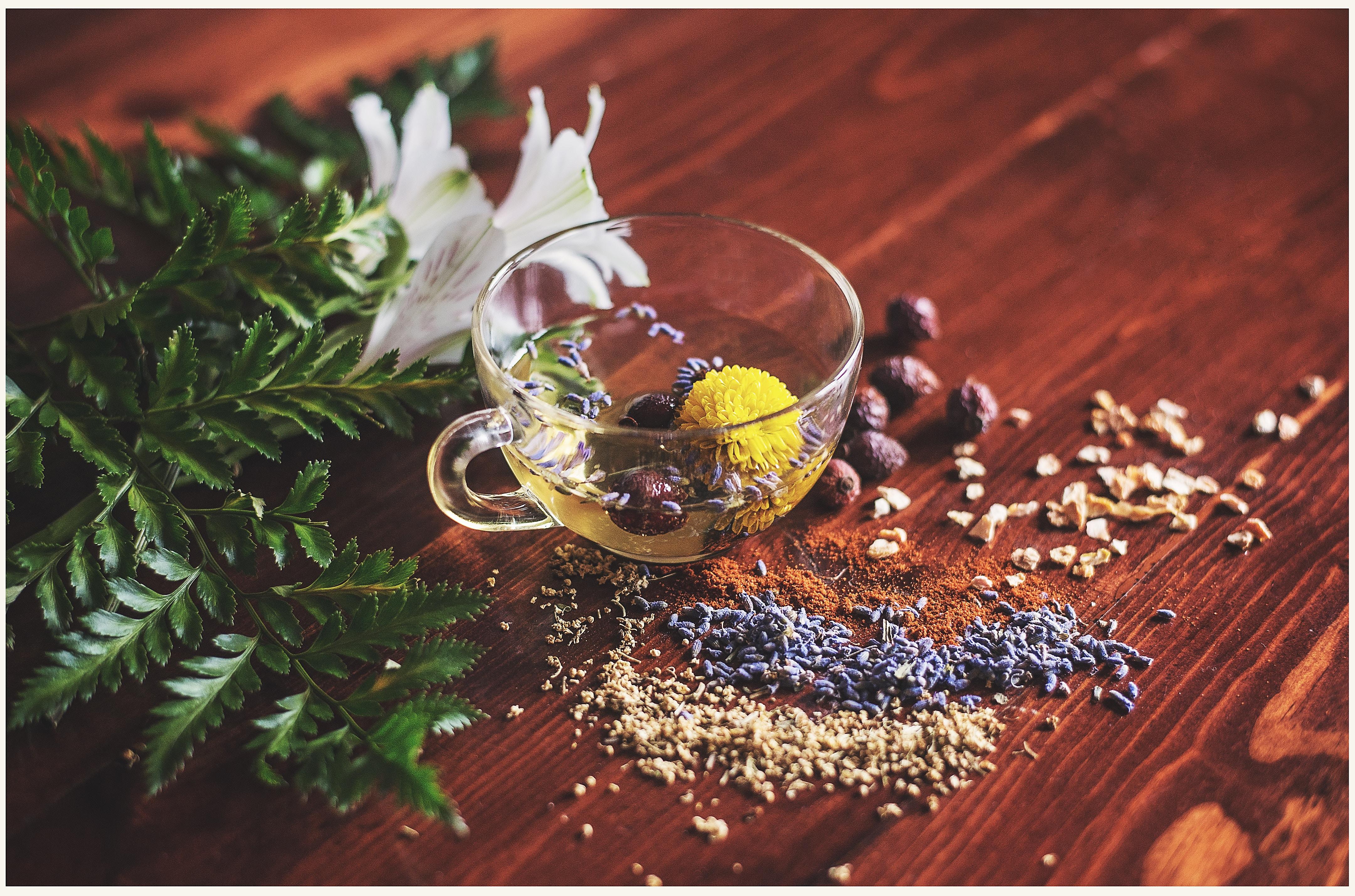 Tea Flower and Seeds