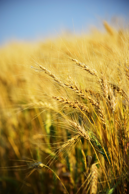 Grains. Source: Pexels.