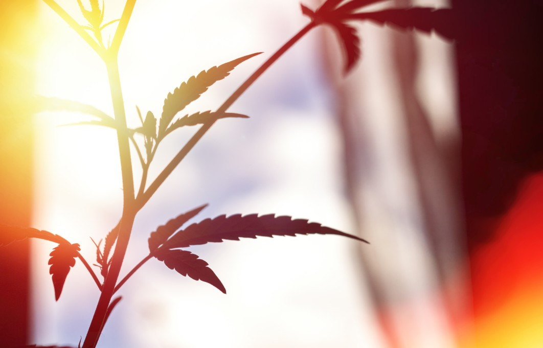 cannabis for anxiety