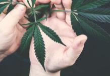 Hands cannabis