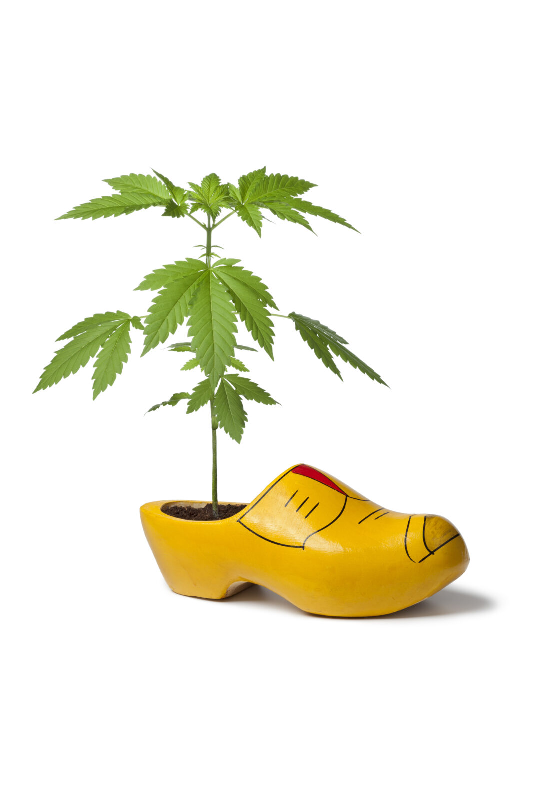 5 Amazing Facts about Cannabis Plants that You Didn't Know ⋆